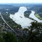 Information on Animals in the Rhine River