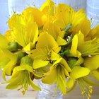 Tipos de flores usadas para un aniversario de boda número 50