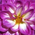 ¿Qué tipo de flores son nativas de México?