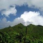 Historia de la selva amazónica