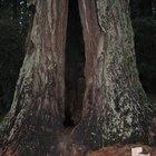 Quantas árvores são necessárias para fazer um livro?