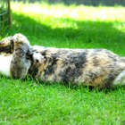 Tratamento para coelhos contra verminose