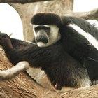 Habitat natural de los monos