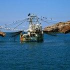 A diferença entre pesca pelágica e demersal