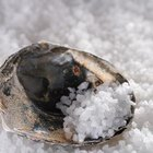 ¿Por qué se utiliza la sal como conservante?