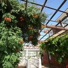 Plantas trepadeiras perenes e de sombra