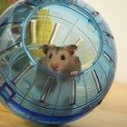 Porque hamsters dormem o dia todo?