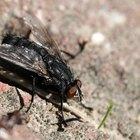 Trampa casera para moscas domésticas