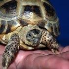Como aparar as garras de uma tartaruga de estimação