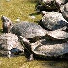 ¿Dónde viven las tortugas en su hábitat natural?