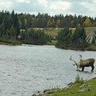 Plantas y animales de Alaska interior