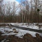 Frost Heave in Soils