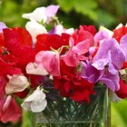 How to Make Sweet Pea Flowers With Gum Paste