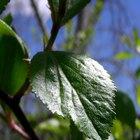 Pasos de la fotosíntesis
