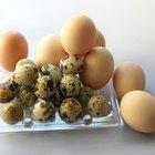 Como aquecer cascas de ovos quebradas no microondas para alimentar pássaros