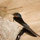How to remove birds from the eaves of houses
