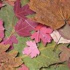 Como pintar com tintas acrílicas em folhas secas naturais