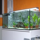 How to Prepare Brackish Water for Guppies