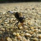¿Cómo se adaptan los insectos a vivir en la tierra?