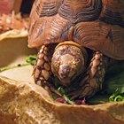 ¿Cómo consiguen alimento las tortugas?