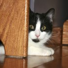 Why Does My Cat Hide Under the Bed?