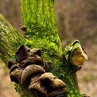 Hongos de árboles y musgos