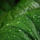 Dicas fáceis para deixar as folhas das plantas radiantes