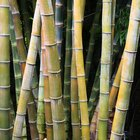 How to Make Bamboo Canes