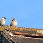 Ciclo de vida dos pássaros