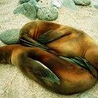 Quais especializações os veterinários de mamíferos aquáticos fazem?
