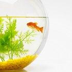 Aquarium Shapes and Design Ideas