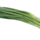 Cómo cortar cebolla de verdeo