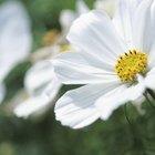 Diferencia entre las plantas que florecen y las que no