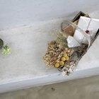 Cómo preservar las hojas de eucalipto para arreglos florales deshidratados