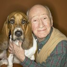How to Take Care of Old Dogs for Quality of Life