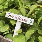 ¿Cuándo es un buen tiempo para cultivar el garrofón?