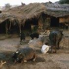 O que são povoamentos dispersos?