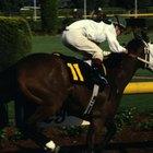 Cómo escoger un caballo ganador en el hipódromo