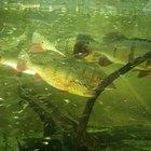 Cómo la acidez del agua afecta la fotosíntesis en las plantas acuáticas