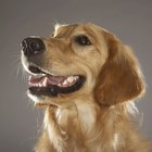 How to Use Baking Soda for Dog Toothpaste