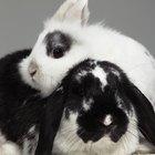 Como aplicar ivermectina topicamente em coelhos?