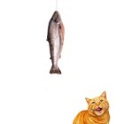 Can You Give Cats Canned Mackerel?