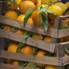 Los elementos de la naranja