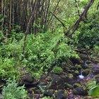 Lista de las plantas del bosque tropical