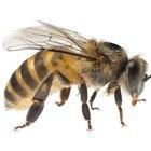 Cómo hacer un ahumador casero para abejas