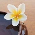 El significado del frangipani
