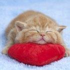 Snoring in Kittens