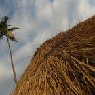 Cómo construir un techo de rama de palmera