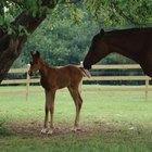 Etapas del parto y nacimiento en caballos