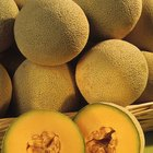 Cómo saber si un melón está maduro